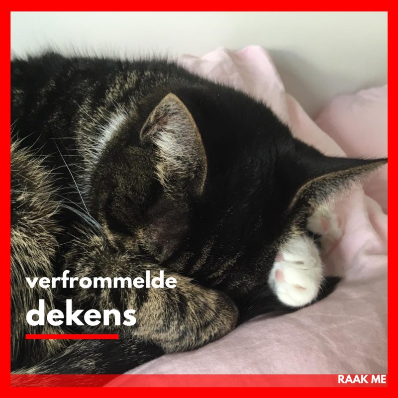 Nog even over de kat